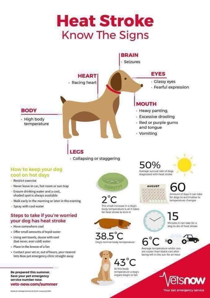 Hot weather and its potential impact on our cherished companions